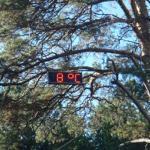 «Теплее!» — подбадривает заблудившегося грибника счетчик Гейгея. Фото Тимура Ясинского.